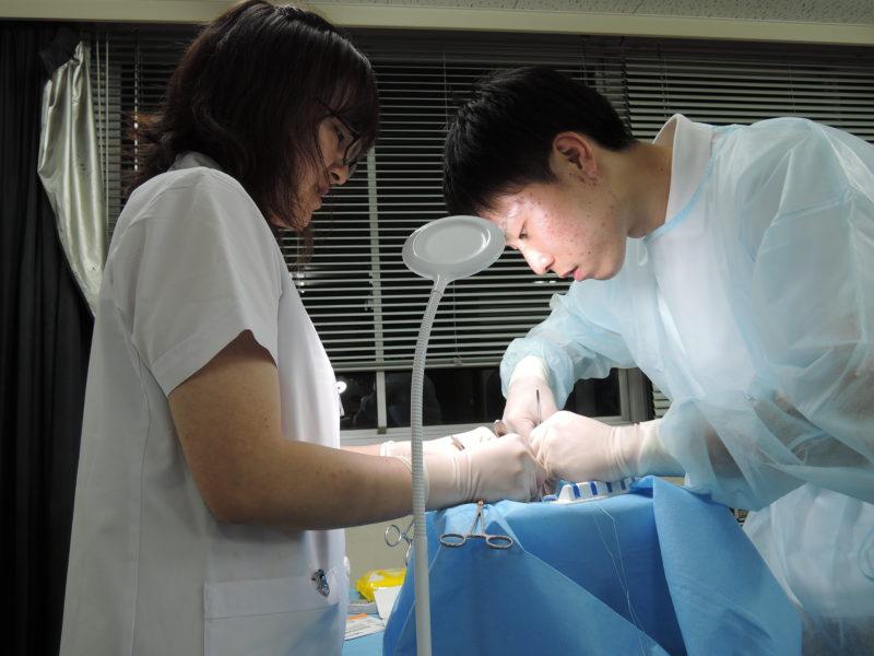 豚心臓での手術シミュレーションをする学生と医師